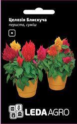Семена целозии Блестящая смесь,  0,01 гр., перистая