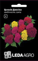 Семена целозии Джессика, 0,01 гр., гребенчатая смесь