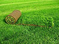 Рулонный газон 1m2