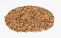 Кориандр посевной плоды (семена)