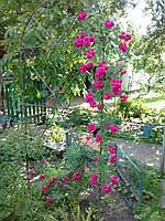 Арка для квітів кована