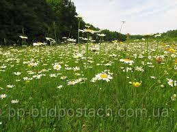 Квіткова галявина в цікавому місці