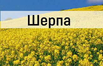 Семена озимого рапса Шерпа сертификат на семена