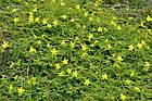Tribulus Terrestris (90% saponins) Трибулус 100 г, фото 8
