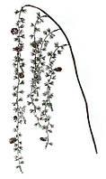 Декоративная ветка из хвои с шишками 60см, набор 12 шт