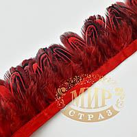 Тесьма перьевая из пера фазана, цвет Siam,  0,5м, высота 5,5 см