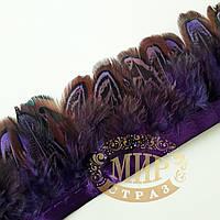 Тесьма перьевая из пера фазана, цвет Purple,  0,5м, высота 5,5 см