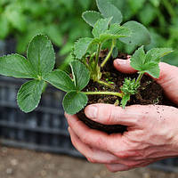 Повторные посевы – что посадить в августе
