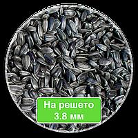 Кондитерский подсолнечник семена подсолнечника Калибровка 3.8+