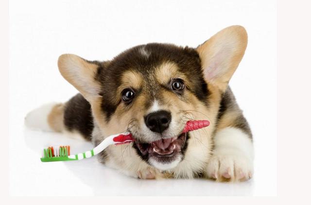 Гигиена и уход за животными