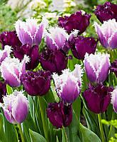 Арт-набор Чароит (7 луковиц тюльпанов), фото 1