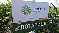 Семена кукурузы ДЗ Латорица ФАО 190, фото 1