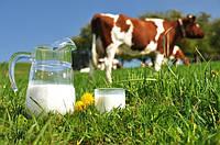 От чего зависит состав и качество молока?
