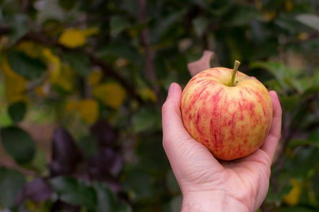 Як правильно посадити фруктовий сад.