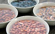 Польза замачивания орехов и семечек