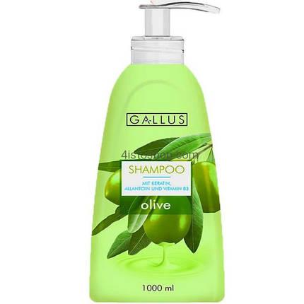 Шампунь Gallus Shampoo Oliven Extrakt с экстрактом оливок, фото 2
