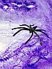 Декоративная Цветная Искусственная Паутина с Пауками Прикол для Вечеринки, фото 4