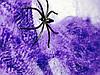 Декоративная Цветная Искусственная Паутина с Пауками Прикол для Вечеринки, фото 5