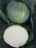 Семена капусты Центурион F1  50 шт.