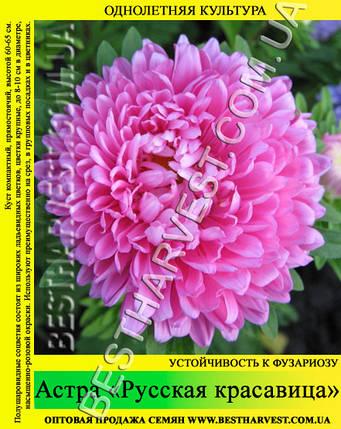 Семена Астры «Русская красавица» 50 г, фото 2