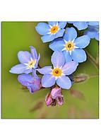 Фотокартина на холсте Дикий цветок, 100*100 см
