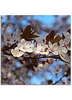 Фотокартина на холсте Вишневый сад, 100*100 см