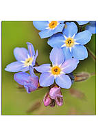 Фотокартина на холсте Дикий цветок, 25*25 см