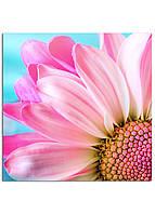 Фотокартина на холсте Розовая ромашка, 25*25 см