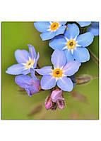 Фотокартина на холсте Дикий цветок, 30*30 см