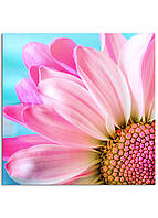 Фотокартина на холсте Розовая ромашка, 30*30 см