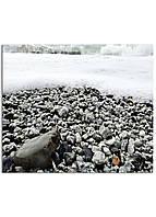 Фотокартина на холсте Морская пена, 30*40 см