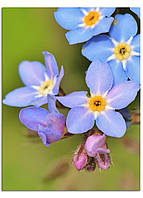 Фотокартина на холсте Дикий цветок, 30*40 см