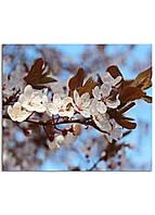 Фотокартина на холсте Вишневый сад, 30*40 см
