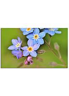 Фотокартина на холсте Дикий цветок, 30*50 см