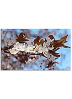 Фотокартина на холсте Вишневый сад, 30*50 см