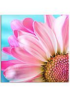 Фотокартина на холсте Розовая ромашка, 40*40 см