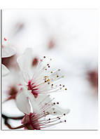 Фотокартина на холсте Первоцвет, 40*50 см