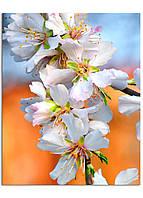 Фотокартина на холсте Белое соцветие, 40*50 см