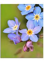 Фотокартина на холсте Дикий цветок, 40*50 см