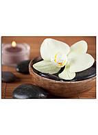 Фотокартина на холсте Белая орхидея, 40*60 см