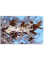 Фотокартина на холсте Вишневый сад, 40*60 см