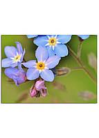 Фотокартина на холсте Дикий цветок, 50*100 см