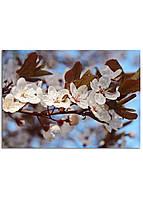 Фотокартина на холсте Вишневый сад, 50*100 см