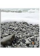 Фотокартина на холсте Морская пена, 50*50 см