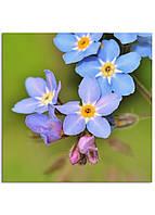 Фотокартина на холсте Дикий цветок, 50*50 см