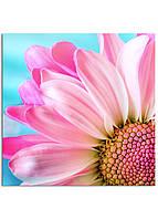 Фотокартина на холсте Розовая ромашка, 50*50 см