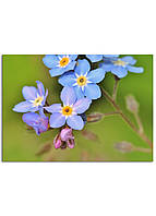 Фотокартина на холсте Дикий цветок, 50*70 см