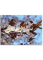 Фотокартина на холсте Вишневый сад, 50*70 см