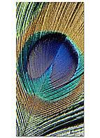 Фотокартина на холсте Перо павлина, 60*120 см