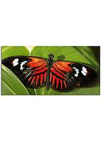 Фотокартина на холсте Бабочка, 60*120 см